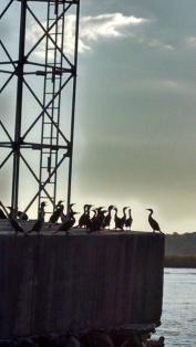 Cormorants on Lattice Channel Marker
