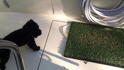 Frankie deciding the logistics of a pee pad