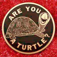 are_you_a_turtle