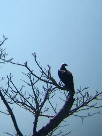Punta Blanca-Father Eagle watching the surrounding area